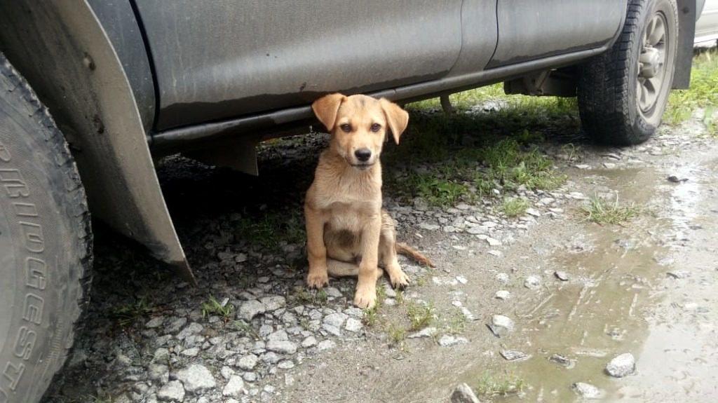 dog_car-1